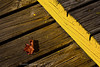 A lone leaf on a wooden deck. Spotted in Cerro Catedral, Argentina on an autumn day.