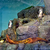 The penguin exhibit houses Magellanic penguins from South America and South African penguins. The aquarium hosted 19 penguins from the Aquarium of the Americas in New Orleans along with two sea otters after that aquarium was badly damaged by Hurricane Katrina.
