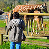 Beth is charmed by the giraffes.